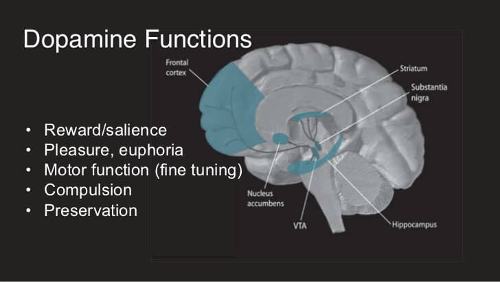 what-does-dopamine-do-in-the-brain-and-what-is-its-function-1